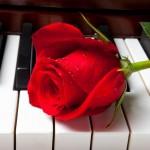 Музика за розите