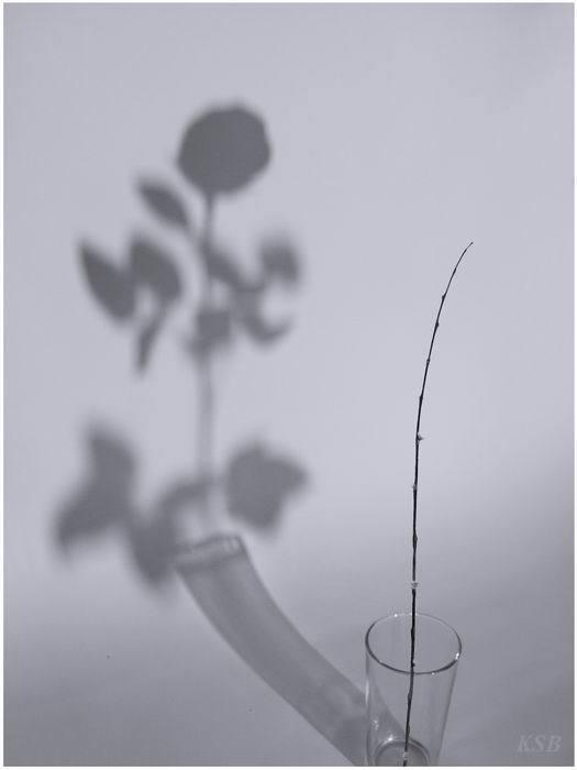сянка от роза