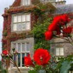 Градина с рози