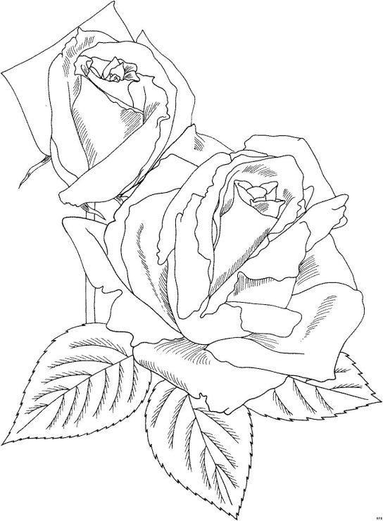 рози за оцветяване